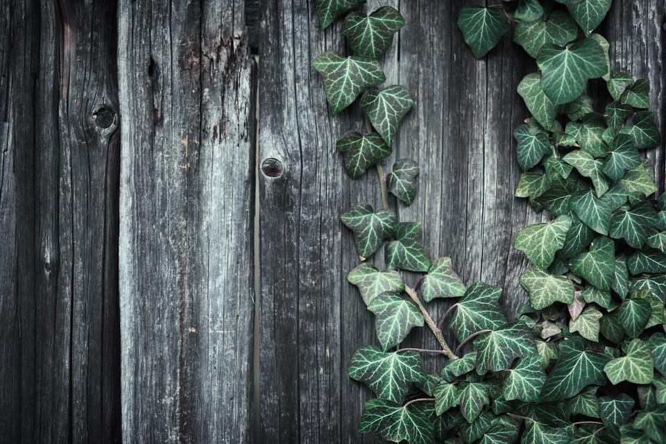 plot s břečťanem